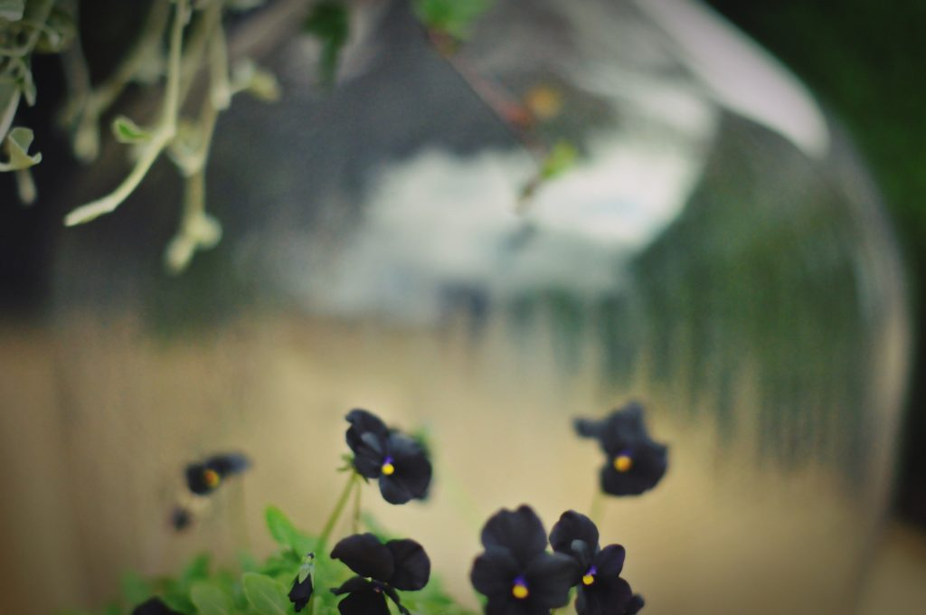 black_viol160831